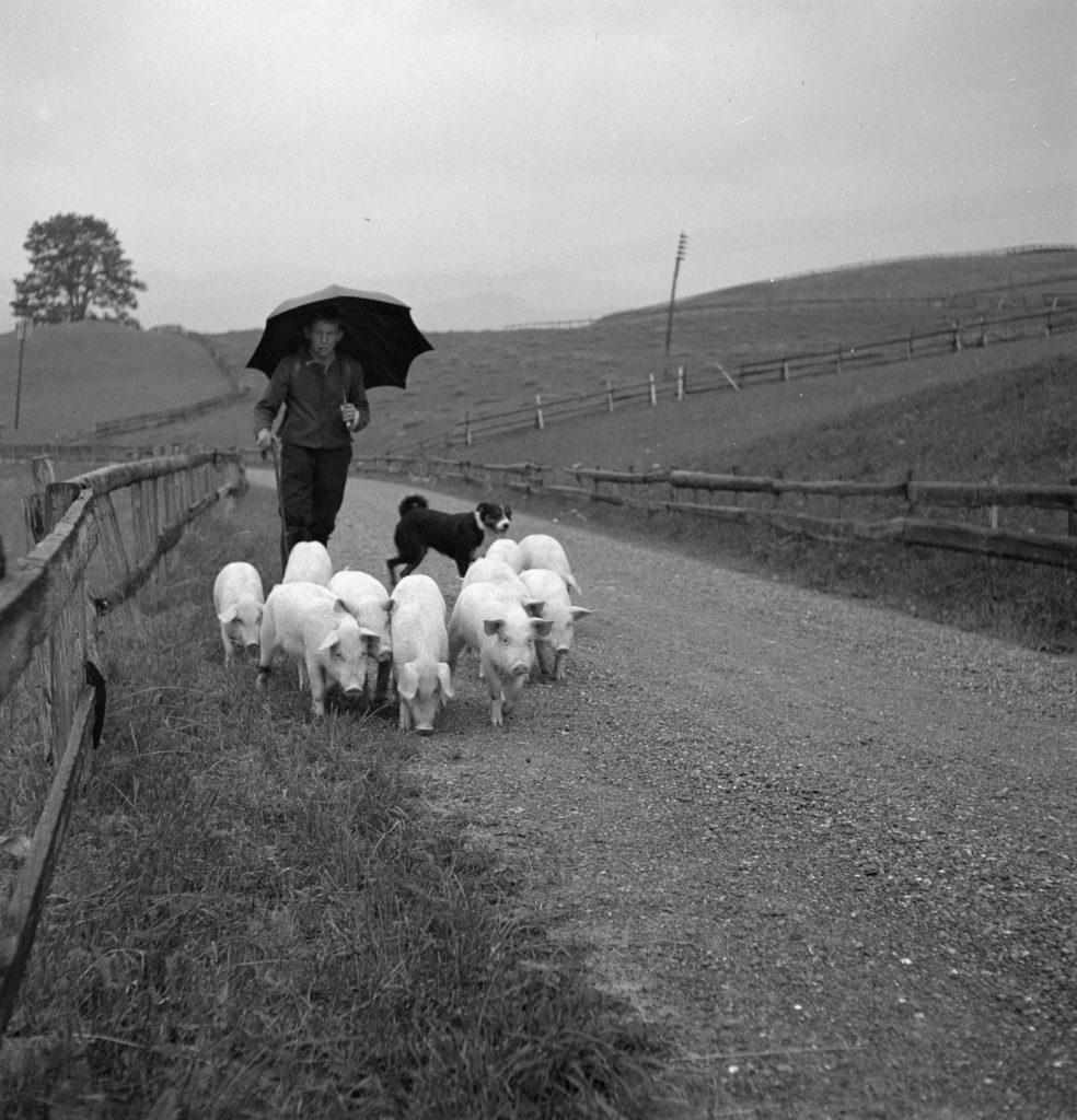 Fotoarchiv der Schweizerischen Gesellschaft für Volkskunde. Senntumsmalerei, Schweinetreiben und Silvesterchlausen